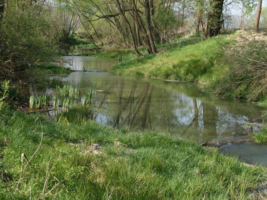 Ein Flussabschnitt der Lafnitz