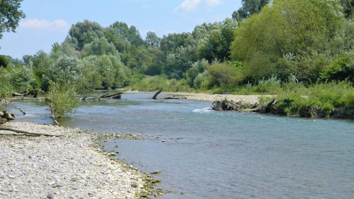 Der Fluss Pielach und seine Ufer mit Bäumen